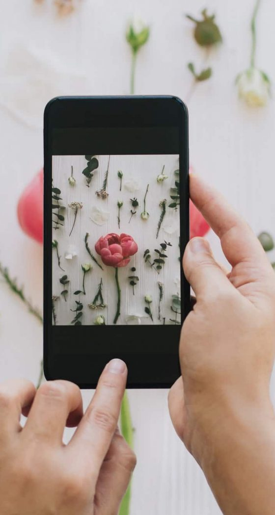 Blogging and making social media content. Hands holding phone and taking photo of flowers flat lay